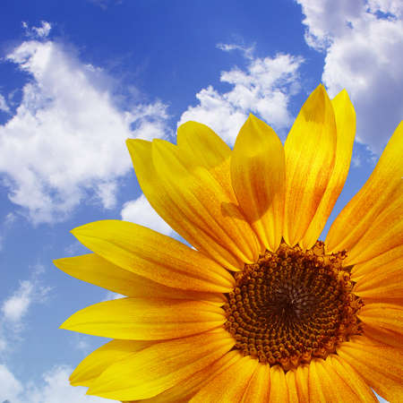 The blue sky with sunflower, background photo