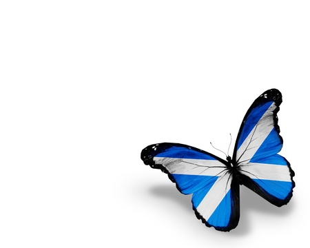 Scottish flag butterfly, isolated on white background photo