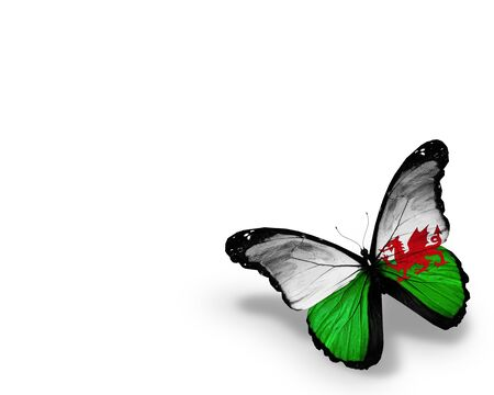 Wales flag butterfly, isolated on white background photo