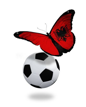 ball like: Concept - butterfly with Albanian flag flying near the ball, like football team playing