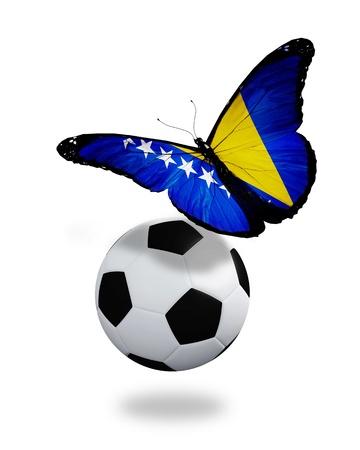 ball like: Concept - butterfly with Bosnia Herzegovina flag flying near the ball, like football team playing