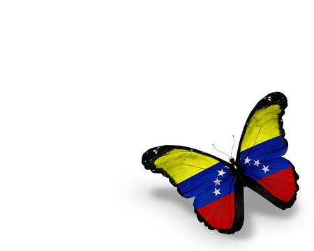 Venezuelan flag butterfly, isolated on white background Stock Photo - 14602824