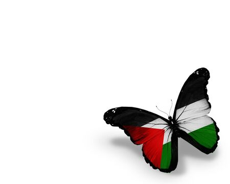 palestinian: Palestinian flag butterfly, isolated on white background