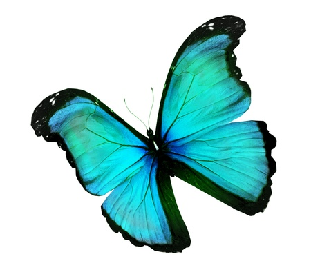 Morpho turquoise butterfly , isolated on white Stock Photo