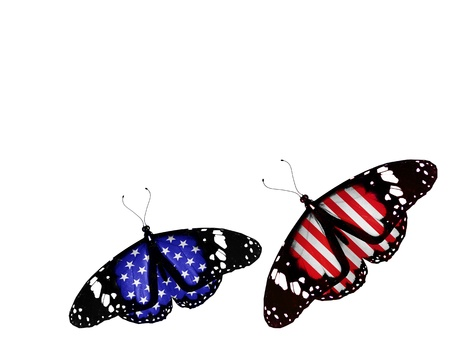Two american flag butterflies, isolated on white background photo