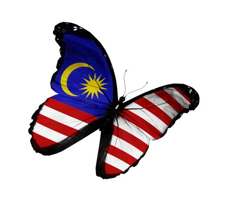 Malaysian flag butterfly flying, isolated on white background photo