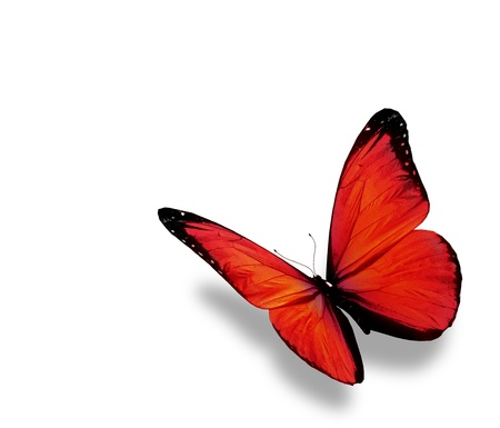 Red butterfly , isolated on white background