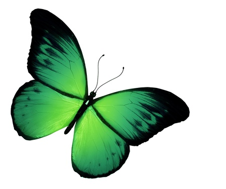 Green butterfly, isolated on white background