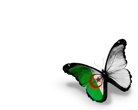 Algeria: Algerian flag butterfly, isolated on white background