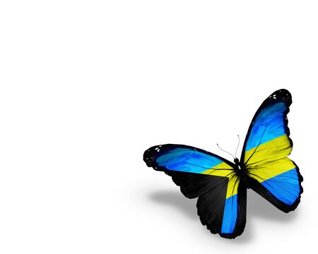 bahamian: Bahamian flag butterfly, isolated on white background