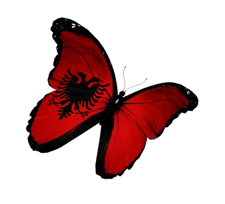 Bandiera albanese farfalla volare, isolato su sfondo bianco Archivio Fotografico - 14632234