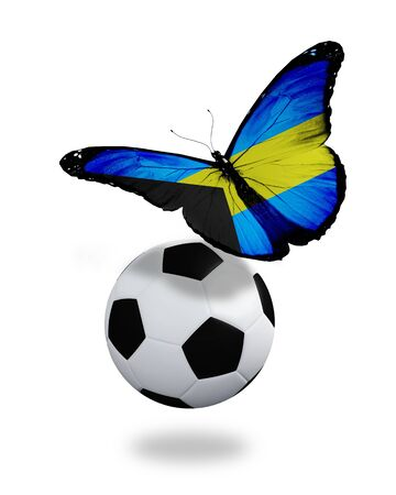 bahamian: Concept - butterfly with Bahamian flag flying near the ball, like football team playing   Stock Photo