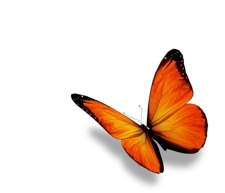 Orange butterfly , isolated on white background photo