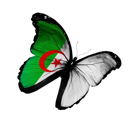 Algeria: Algerian flag butterfly   Stock Photo
