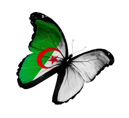 Algierski: Algierczyk flaga motyl Zdjęcie Seryjne