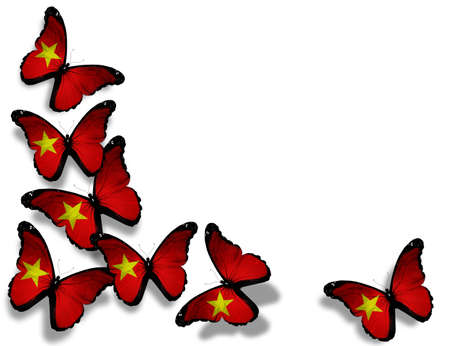 Vietnamese flag butterflies  photo
