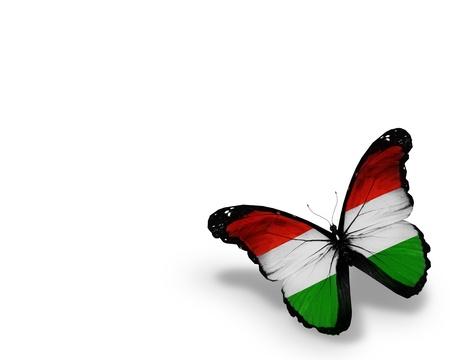 macar: Macar bayrağı kelebek Stok Fotoğraf