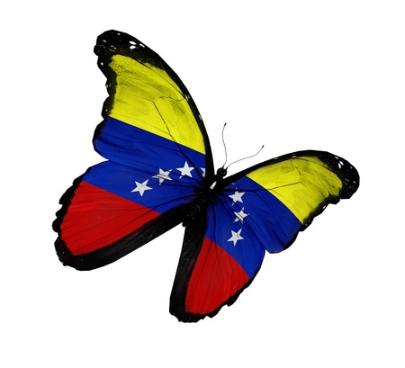 Venezuelan flag butterfly flying  photo
