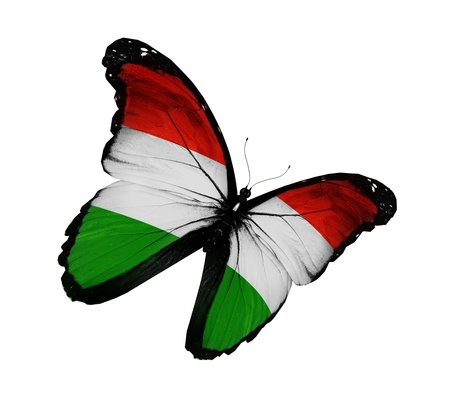 hungary: Hungarian flag butterfly flying  Stock Photo