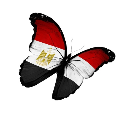 flag of egypt: Egyptian flag butterfly flying