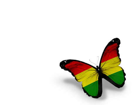 Bolivian flag butterfly, isolated on white background photo