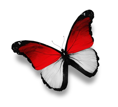 the indonesian flag: Indonesian flag butterfly, isolated on white Stock Photo
