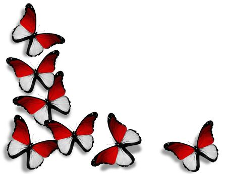 Indonesian flag butterflies, isolated on white background Фото со стока