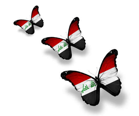 Three Iraqi flag butterflies, isolated on white photo