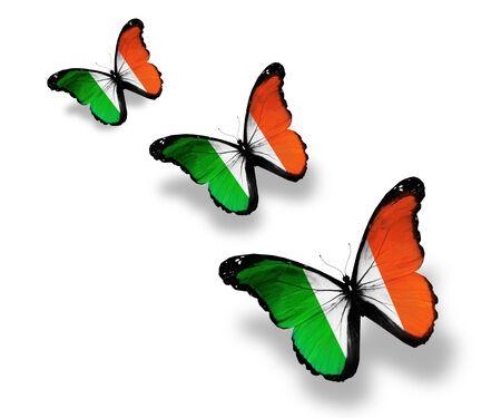 Three Irish flag butterflies, isolated on white photo