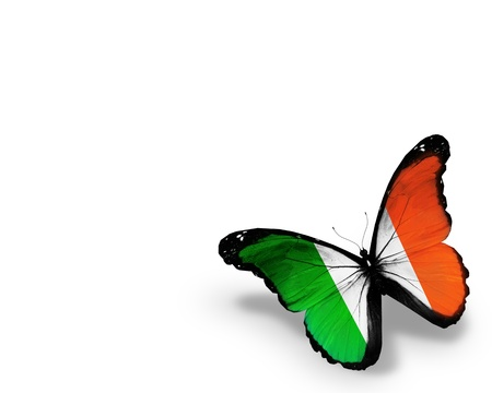 Irish flag butterfly, isolated on white background photo