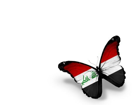 iraqi: Iraqi flag butterfly, isolated on white background