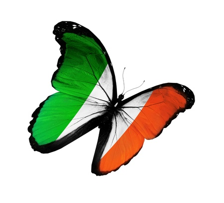 Irish flag butterfly flying, isolated on white background photo