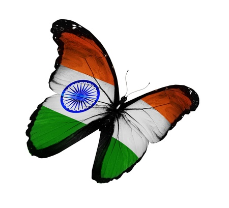 indian animal: Indian flag butterfly flying, isolated on white background
