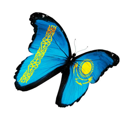 Kazakhstani flag butterfly flying, isolated on white background photo