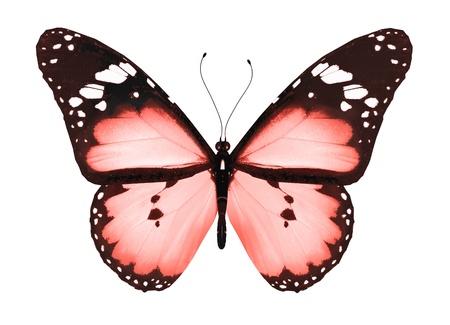 Rode vlinder, geïsoleerd op wit