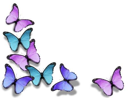 mariposas volando: Mariposas diferentes, aislados en fondo blanco Foto de archivo