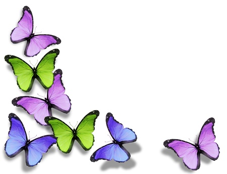 Different butterflies, isolated on white background photo
