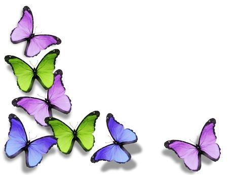 mariposa azul: Mariposas diferentes, aisladas sobre fondo blanco