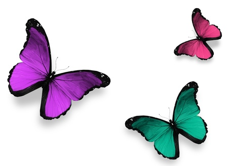 morpho: Three butterfly