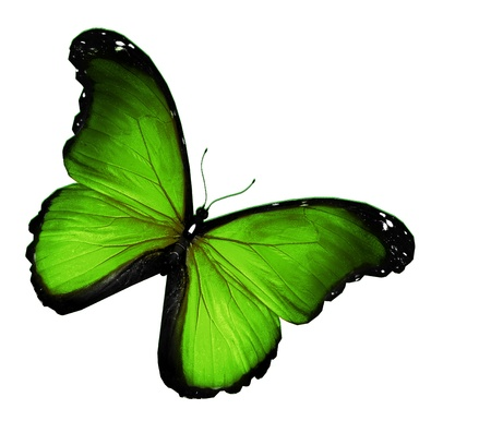 Green butterfly on white background Stock Photo