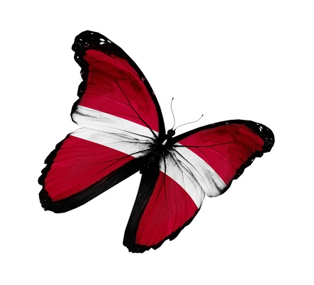 Latvian flag butterfly flying, isolated on white background