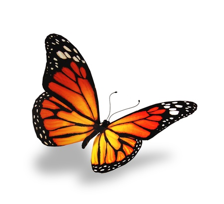 mariposas volando: Amarillo-naranja mariposa, aislado en fondo blanco Foto de archivo