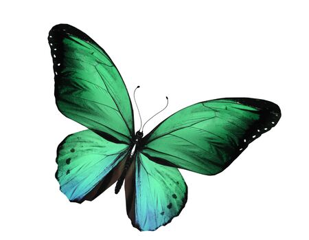 Green butterfly flying, isolated on white background photo