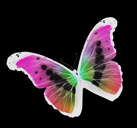 Night butterfly flying, isolated on black background photo