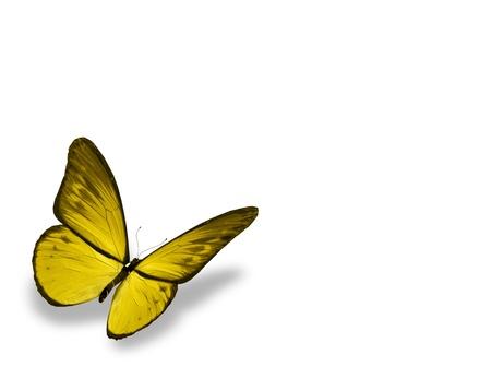 butterflies flying: Amarillo mariposa, aislado en fondo blanco Foto de archivo
