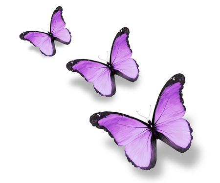 mariposas volando: Tres mariposas violetas bandera, aislado en blanco
