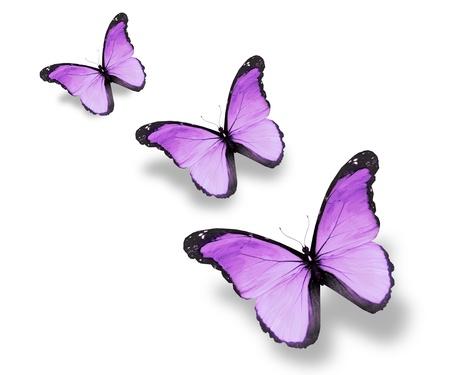 Trois papillons violets drapeau, isolé sur blanc