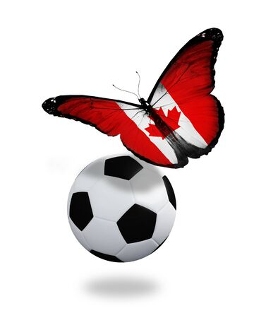 canadian football: Concept - butterfly with Canadian flag flying near the ball, like football team playing