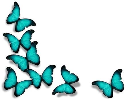 turquesa color: Mariposas de color turquesa, aislados en fondo blanco