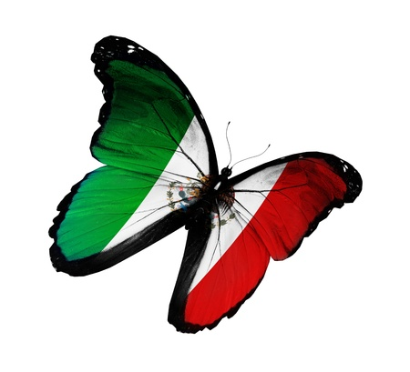 Mexican flag butterfly flying, isolated on white background photo